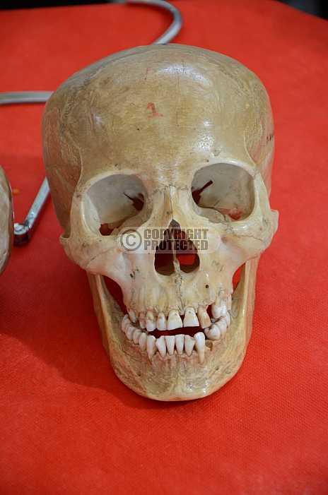 Esqueleto - Skeleton
