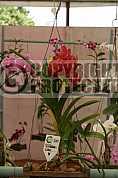 Orquidea - Orchid