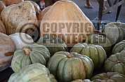 Abobora - Pumpkin