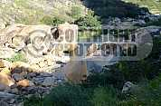Açude Gargalheiras - Gargalheiras Dam