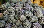 Pinha - Custard apple