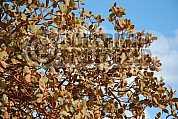 Folhas - Leaves
