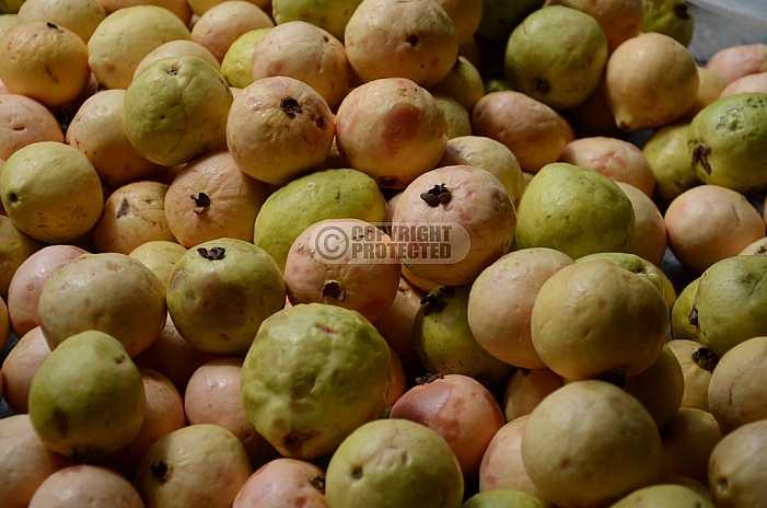 Goiaba - Guava