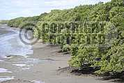 Mangue - Mangrove