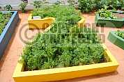 Horta - Vegetable garden