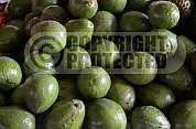 Abacate - Avocado