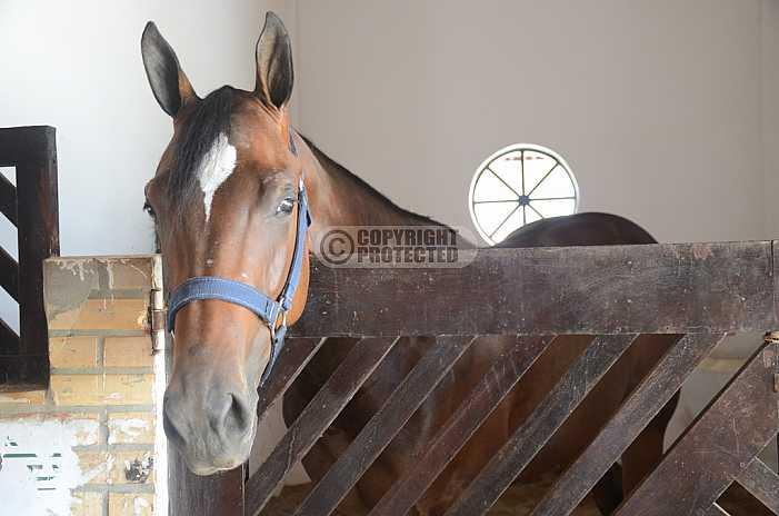 Cavalo - Horse