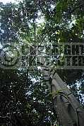 Santuario ecologico de Pipa