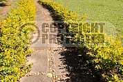 Caminho - Path