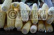 Milho - Corn