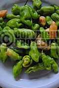 Pimenta - Pepper