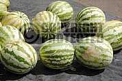 Melancia - Watermelon